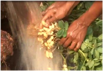 महाराष्ट्राच्या जलयुक्त शिवार प्रकल्प अभियानाची देशभरात दखल; इतर राज्यही प्रकल्प राबविणार : पंकजा मुंडे