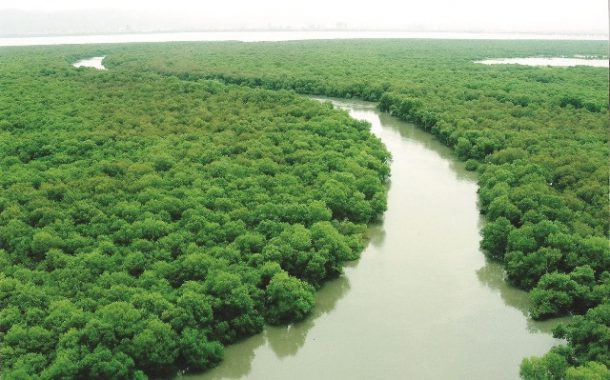 गोदरेज अँड बॉयसची खारफुटी वनांविषयीची वेबसाईट आता मराठीमध्ये देखील उपलब्ध