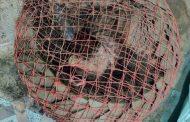 खवल्या मांजरासह मांडूळ सापाची तस्करी करणारी टोळी गजाआड; 8 जणांना अटक, शहर पोलिसांत गुन्हा दाखल
