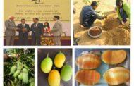 वर्षभर फळ देणारे आंब्याचे वाण; कोटा येथील शेतकऱ्याने केले विकसित